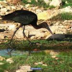 Lampedusa Birdwatching - Foto di Stefano Greco per Lampedusa Today™